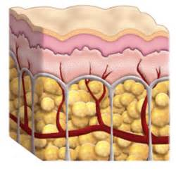 what is cellulite picture 10