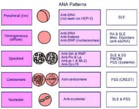 liver problems and positive ana test picture 5