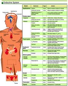 side effects of thytrophin picture 6