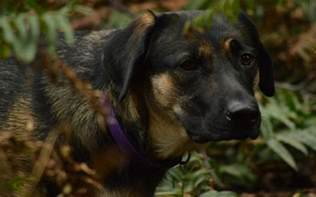 iiritable bowel disorder dogs picture 6