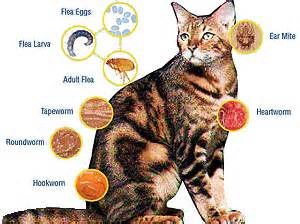 intestinal worms in cats picture 3