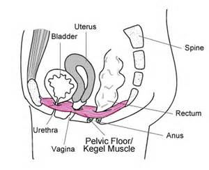 exercised foor the bladder picture 6