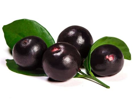 acai berry in tamil picture 1