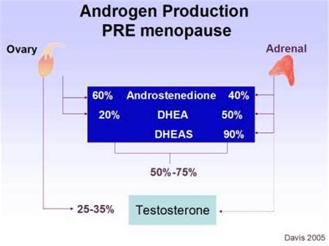 testosterone hormone production picture 10
