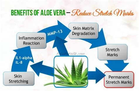 alope vera stretch marks picture 15