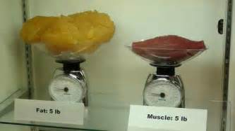 muscle weighs a lot picture 14