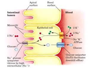 active bowels picture 5