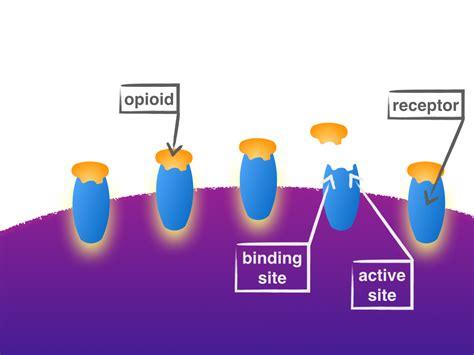 what supplement binds to opiate receptors picture 3