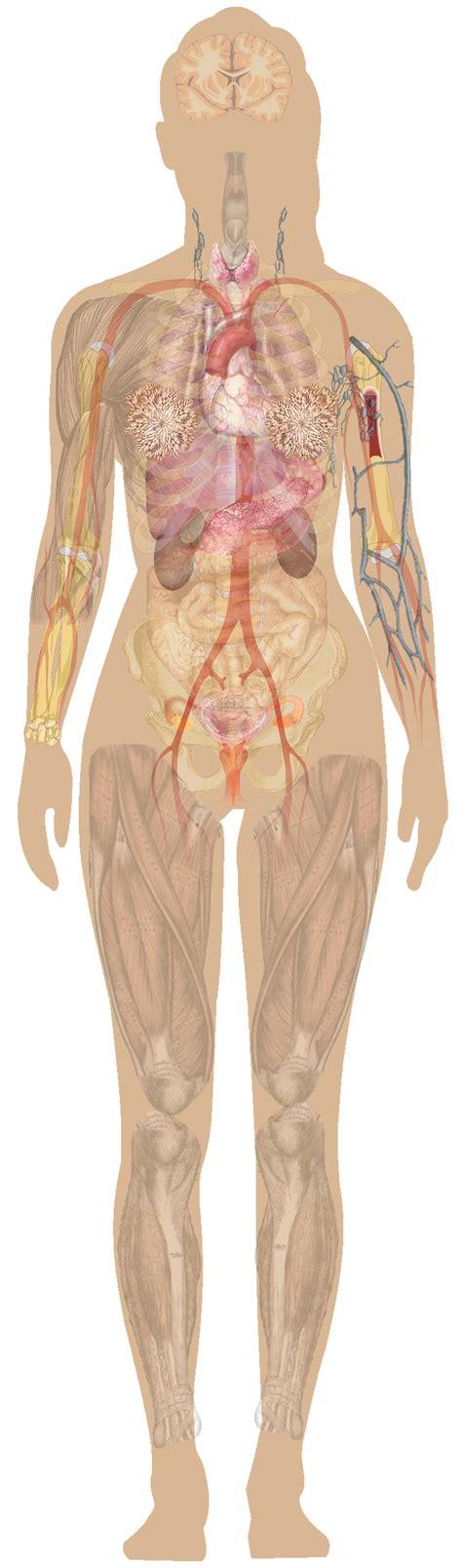 female anatomy pics picture 3