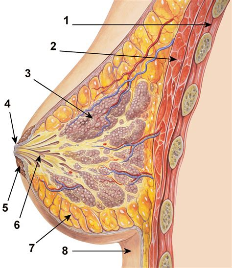 what chinese herb cause breasts to shrink in picture 11