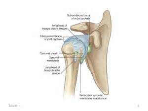 glenohumeral joint picture 1