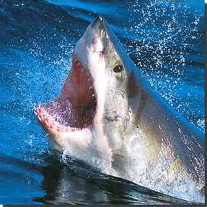 a shark's diet picture 14