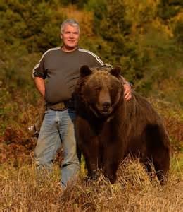 bears men picture 18