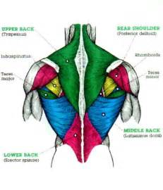 back muscle pain picture 6