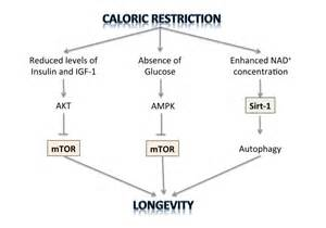 caloric restriction and aging and skin picture 3