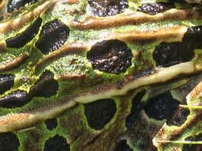 amphibian skin spots picture 1