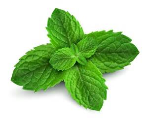 peppermint picture 3