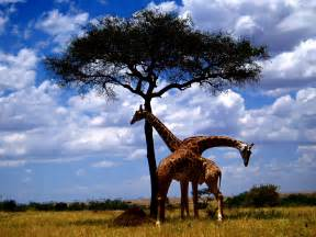 african picture 11