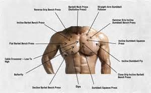chest muscle at picture 14