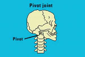 what is a pivot joint picture 13