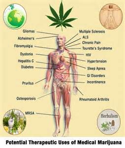 herbs that cause positivr thc picture 6