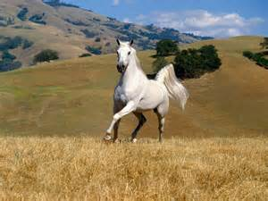 herbal equine picture 1