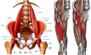 lumbar muscle picture 9