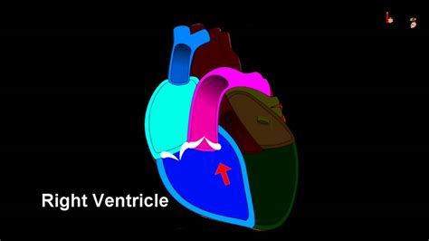 free blood flow animations picture 5