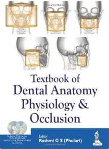 tooth anatomy text picture 5
