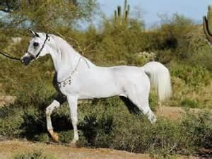 arabian picture 1
