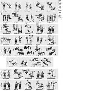 incoming search terms for the article weight lifting picture 3