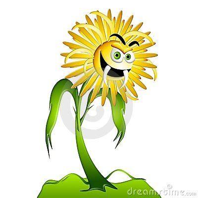 dandelion allergy picture 1