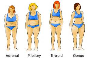 diet by body type picture 14