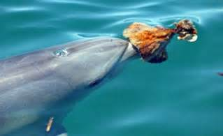 a dolphin's diet picture 17