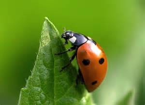 insect picture 10