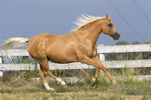 horse skin problems picture 6