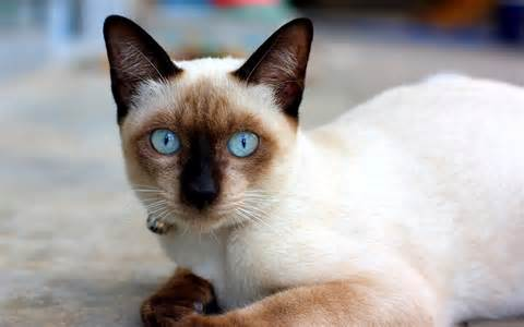 feline h picture 9
