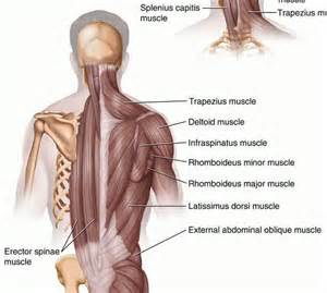 muscle pain in back picture 2