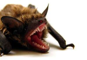 how to get rid of vampire fungus picture 14