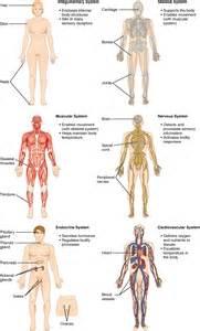 tempormandibula joint painr picture 18