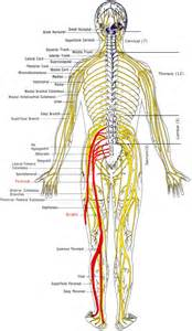 Muscle spasms nerves picture 6
