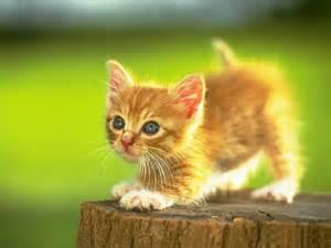 meri maa ke dost ko kitty party mein picture 7