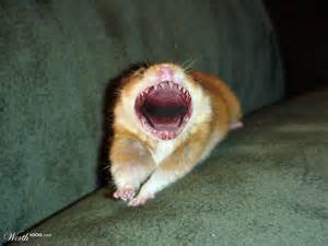 hamster teeth picture 1