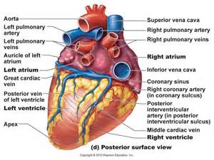 heart diagram picture 2