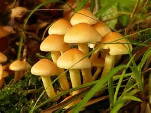 kingdom fungi picture 2
