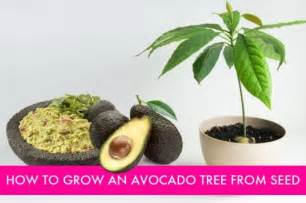 avacado keep green picture 7