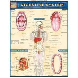 cheap digestive picture 2
