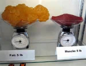 fat pounds vs muscle picture 1