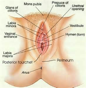 differences between ingrown pubic hair and genital warts picture 1