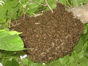 pictures of bee hives and bees picture 7